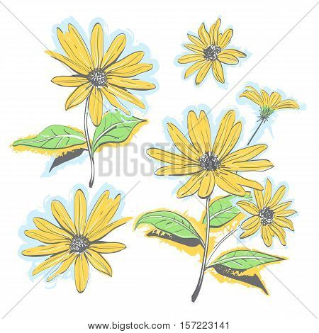 Hand-drawn chamomiles, daisies. Autumn flowers yellow feverfew. Isolated flowers on white background, All elements are editable. Vector watercolor stylization
