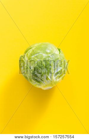 Fresh Green Brussels Sprout, On Vivid Yellow Background