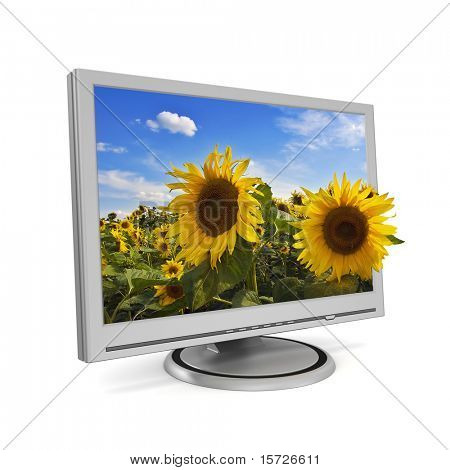 Sunflower looking out of a computer