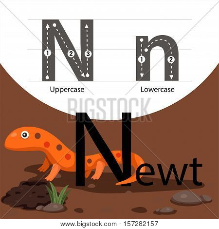 Illustrator of newt with n font for education