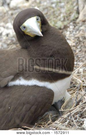 Bird Stare
