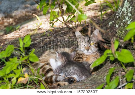 Yellow eyed cat with kitten keeping watch with one eye open