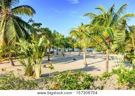 Coconut palms & banana trees by house on Caribbean beach in Belize, Central America