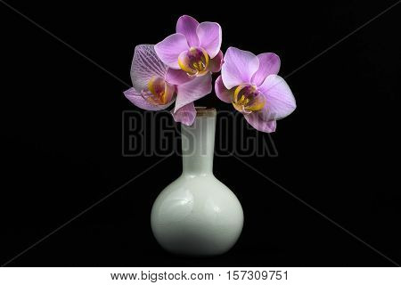 Still life of pink orchid flower in the white vase.