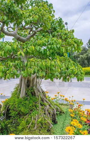 Deciduous bonsai tree in a park in flowerbed