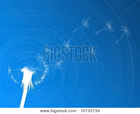 Blow dandelion. Digital concept