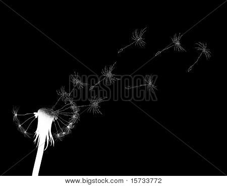 Blow dandelion. Digitized concept