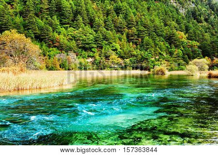 River With Azure Crystal Clear Water Among Evergreen Woods