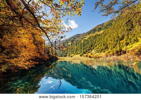 Beautiful View Of Lake With Submerged Tree Trunks