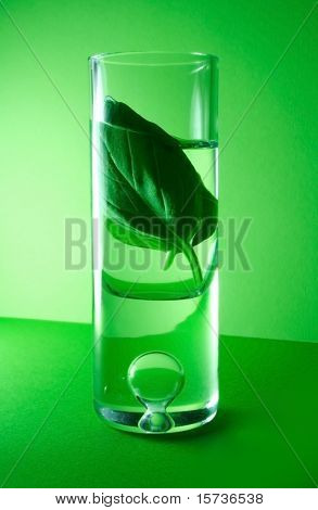 Herbal essences - mint in glass on green background