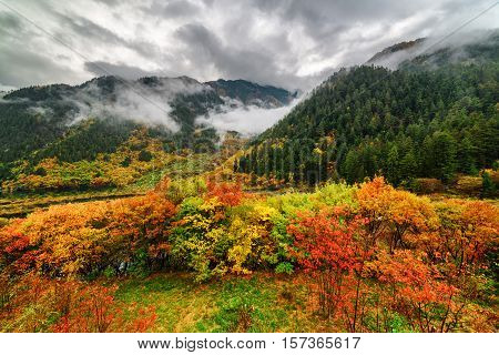 Beautiful View Of Mountains In Fog And Colorful Fall Forest