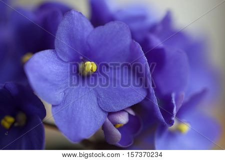 A close up of the violets flowers