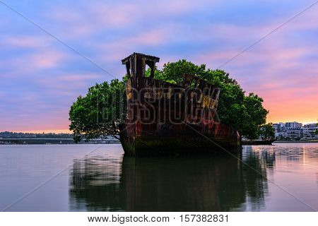 102 year old Shipwrecks of Homebush in Sydney Australia became A Floating Forest.