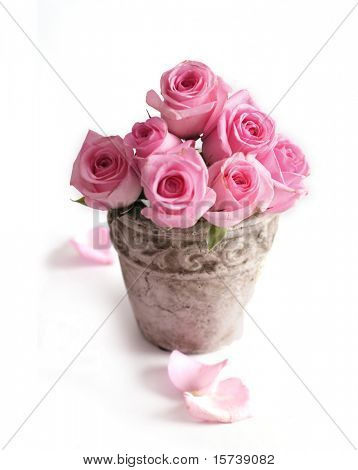 pink roses in flowerpot
