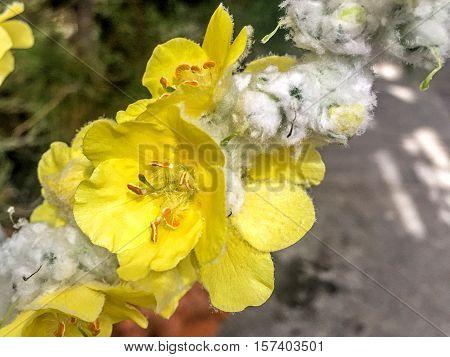 beautiful yellow flower in bloom at the US botanic garden in Washington D.C.