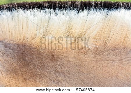 Detail Beautiful mane of a small horse pony.