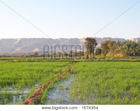 Culture Swamps With Mountains In Thebackground, Oasis Of Bahareyya, Lybian Desert, Egypt