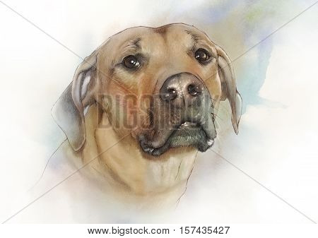 Illustration of the Rhodesian Ridgeback. African lion dog hound. Watercolor Animal collection: Dogs. Watercolor Dog Pug Portrait - Hand Painted Illustration of Pet. Good for banner print T-shirt.