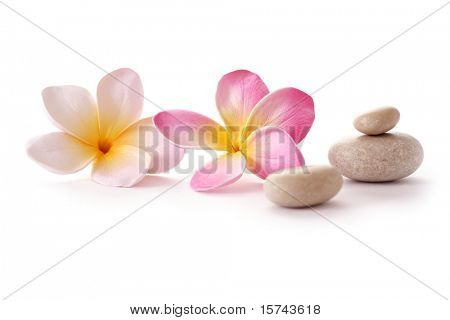 frangipani flowers and zen SPA stones on white background