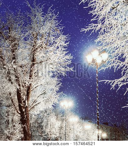 Winter background. Winter night view with shining lantern among the winter frosty trees and falling winter snow. Winter background with colorful winter city night.Winter snowy night -winter background