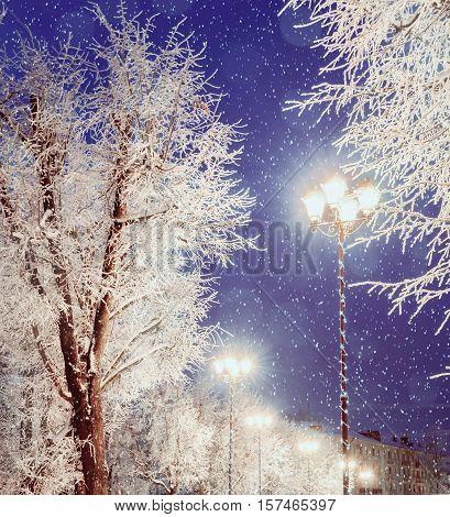 Winter landscape.Winter landscape night view of shining lantern among the winter frosty trees and falling winter snow.Winter landscape of bright winter city night.Winter snowy night -winter landscape