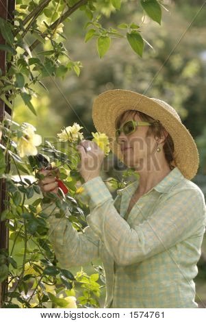 Spring Rose Gardening