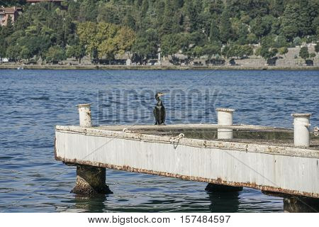 A Cormorant Standing On Pier Standing On A Pier