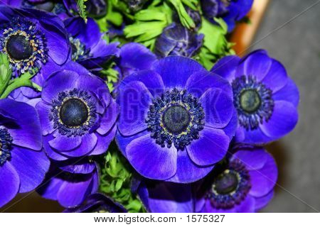 Beautiful Blue Poppy Fowers