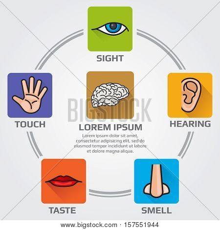 Five human senses smell, sight, hearing, taste, sensory. Vector infographics sence with nose, hand, mouth, eye, ear icons.