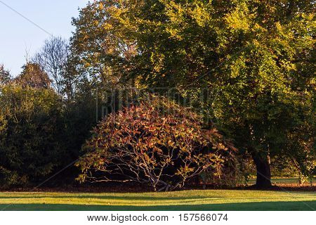 meadow with green grass, early fall, but the leaves on the trees have yellow, on the few trees, one is very high, and the second smallest with red leaves and withered bunches of red, sunny evening,