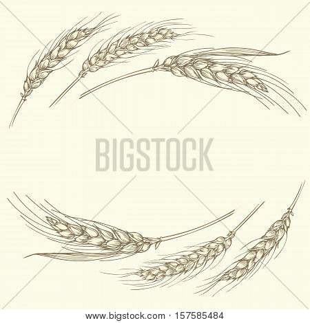 Vector hand drawn illustration of a few gold ripe wheat ears isolated on beige background. Can be used as frame corner or border design element.