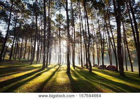 Camping and tent under the pine forest in sunset at Pang Ung pine forest park Pang Ung Mae Hong Son Thailand