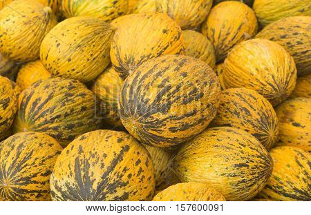 View close-up Turkish melons. Delicious Turkish melon. Many melons. Summer tray market agriculture farm full of organic melons. It can be used as background.