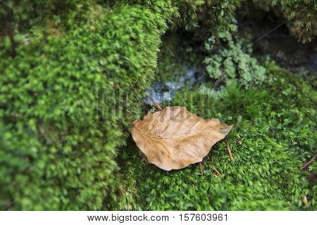 Dry yellow leaf lies on a green lichen close-up