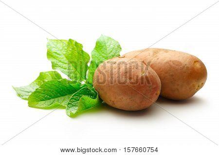 Fresh Whole Potatoes With Green Haulm
