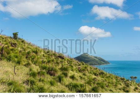 Hiking in lush green nature on South Molle Island, Whitsunday Islands, Queensland, Australia