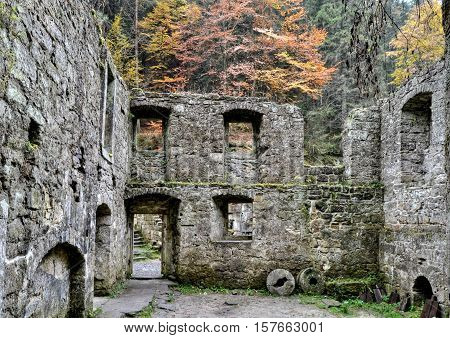 Remnants of the old stone mill without roofs are covered with moss in the background and it is decorated with colorful autumn tree.