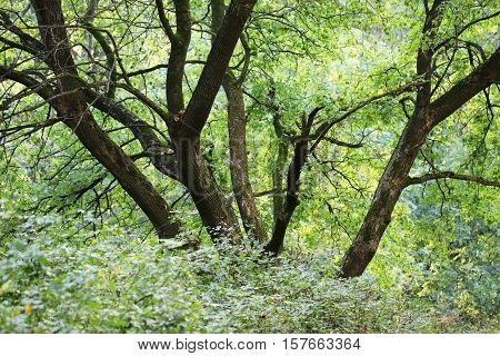 Green Forest On A Bright Sunny Day
