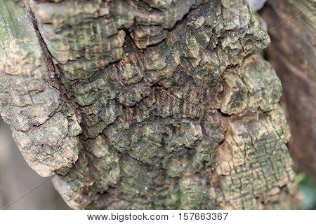 Stump Of Old Tree, Close Up Old Stump Texture