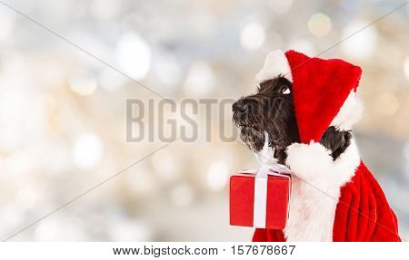 Black dog in santa outfit and christmas gifts