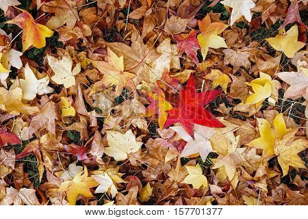 Pile of dry leaves taken from above. Leaves of various colors from yellow to orange to red to brown. natural colors of autumn.