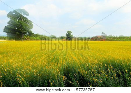 flower field under the afternoon time .