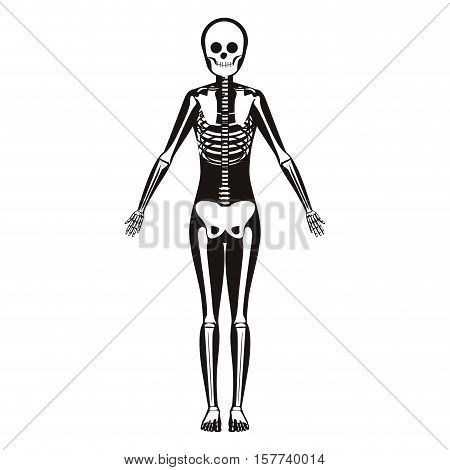 silhouette woman system bone with bone vector illustration