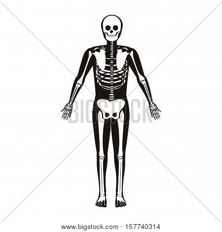 silhouette male system bone with bone vector illustration