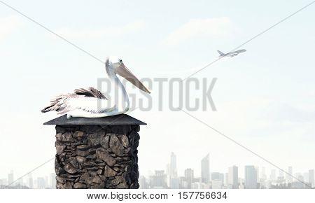 Stork bird on top . Mixed media