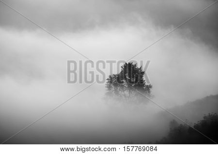 Misty landscape view and sea of clouds at Phuhuayesan in Nong khai province, Thailand.