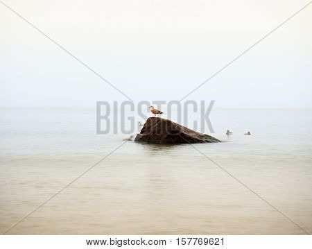 Gull Sit On Big Boulder Sticking Out From Smooth Wavy Sea.