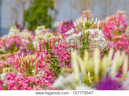 colorful western tare in the garden with background blur