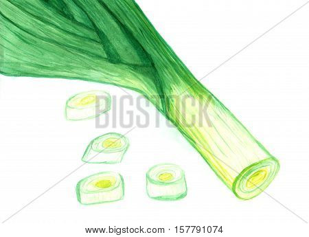 Watercolor painting of green leek on white background, fresh onion hand drawn