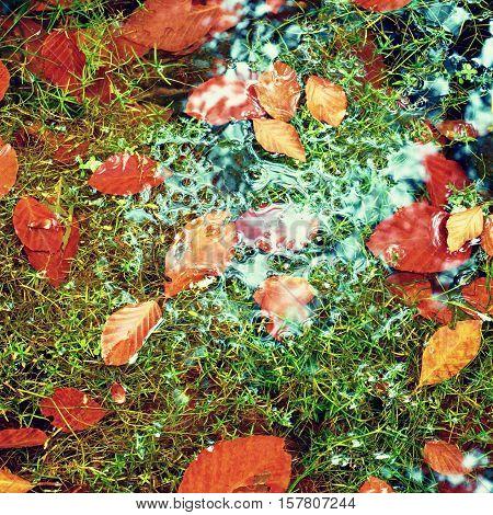 Algae With Caught Fallen  Leaves  On Basalt Gravel In Mirrored Mountain Stream.